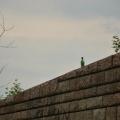 Krákoří zeď